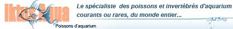 iktus-aqua.fr